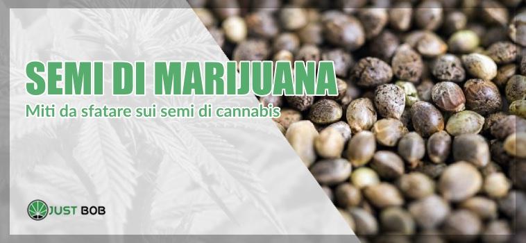 semi di marijuana miti da sfatare