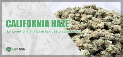 marijuana light California Haze genetica
