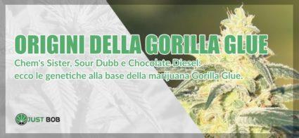 origini Gorilla Glue marijuana light