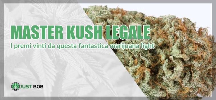 Master Kush legale premi