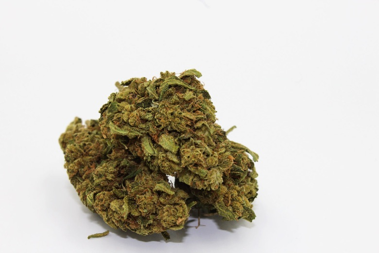 Cannabis Sativa gorilla glue light