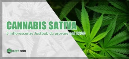 infiorescenze di Cannabis Sativa legale