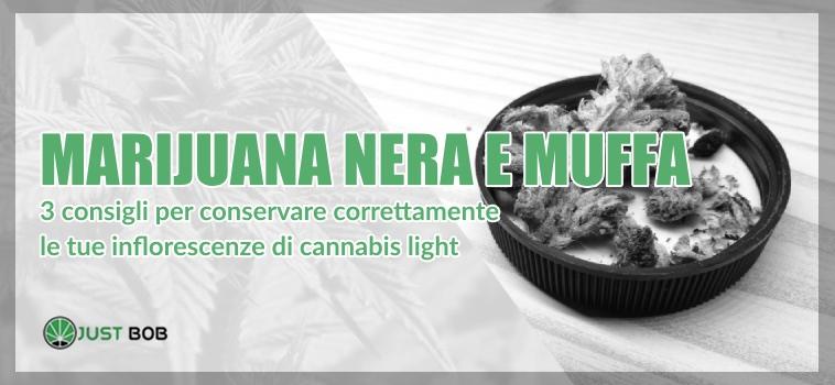 Marijuana nera e muffa