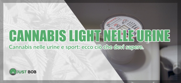 cannabis light nelle urine
