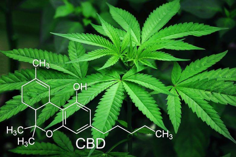 legalizzazione italia 2019 ultime notizie marijuana light