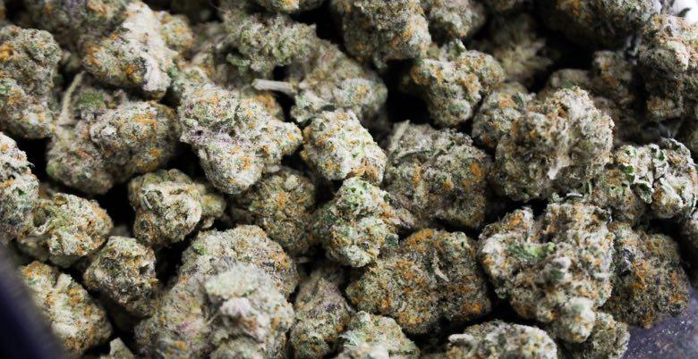 marijuana light consigli per evitare muffa nera