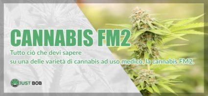 Cannabis FM2 marijuana legale