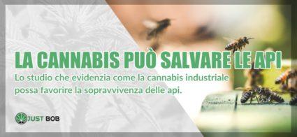 la cannabis può salvare le api
