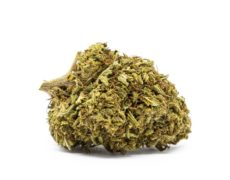 orange bud cannabis legale