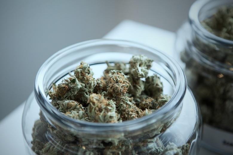 riconoscere il profumo di cannabis light