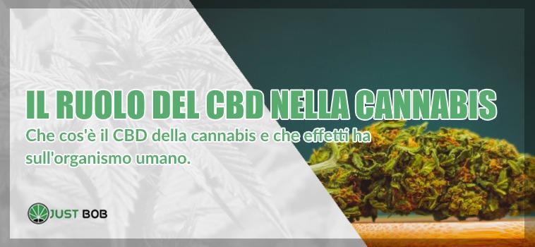 cbe e marijuana legale