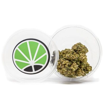barattolo gorilla glue cannabis legale