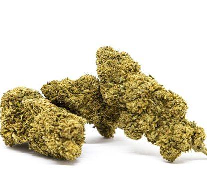 gorilla glue marijuana legale italia