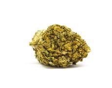 lemon cheese cannabis light italia