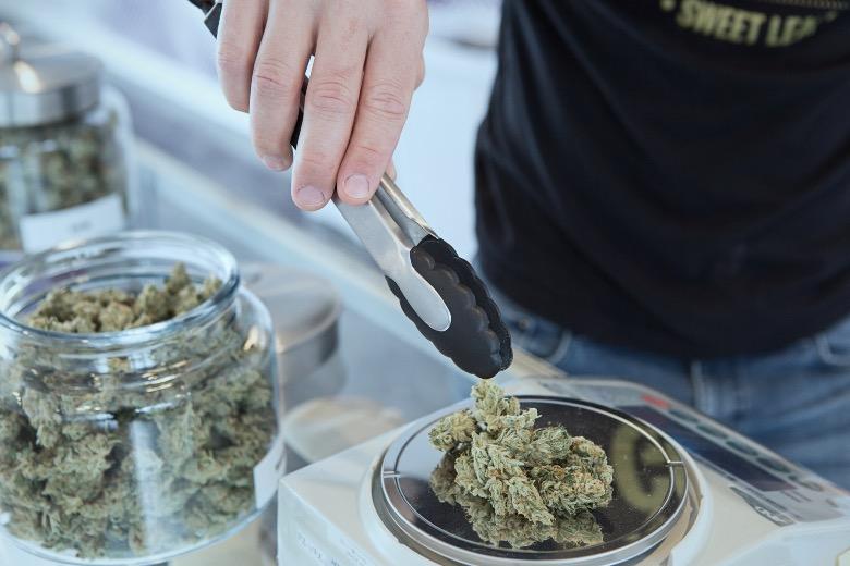 operazione affari in fumo cannabis light archiviata
