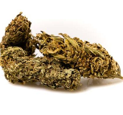 Fiore Cannabis Light CBD Outdoor Mix