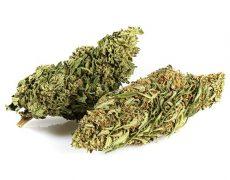 Cannabis light Outdoor buds mix
