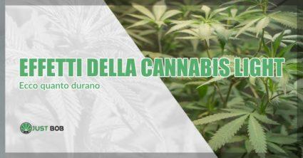 Effetti della cannabis light durata