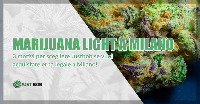 Marijuana legale a Milano