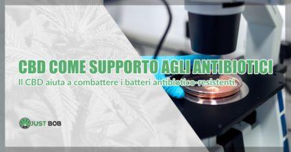 cbd contro batteri antibiotico resistenti