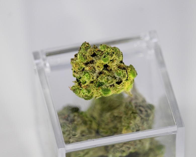 thc e cbd responsabili degli effetti cannabis
