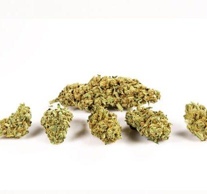 Purple GG 4 marijuana legale