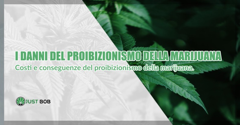 danni proibizionismo marijuana