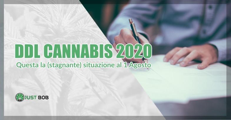 del cannabis situazione al 2020