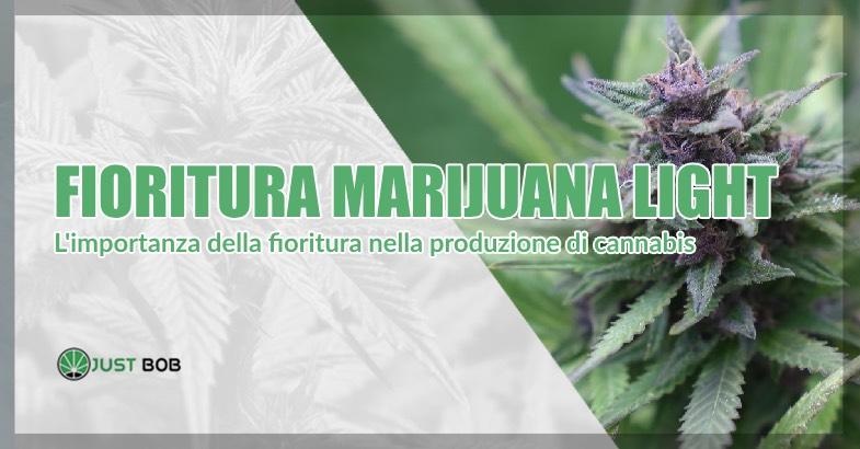 fioritura marijuana light