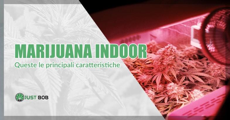 marijuana indoor caratteristiche