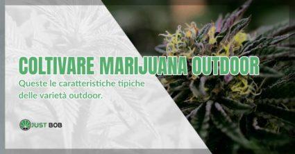 Coltivare marijuana outdoor