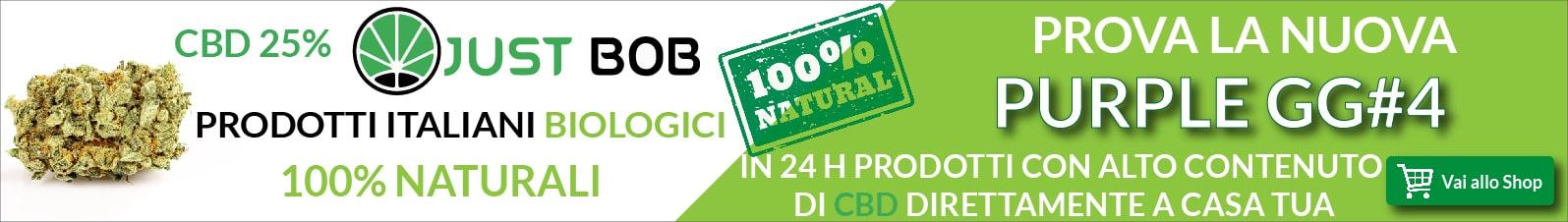 Cannabis legale Purple GG#4 CBD
