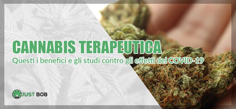 tutti i benefici della marijuana contro il coronavirus