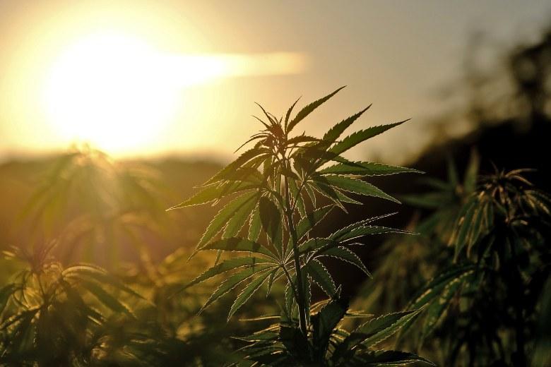 coltivare erba legale all'aperto