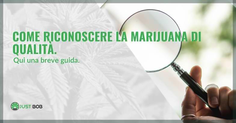 Come riconoscere la marijuana di qualità con l'analisi visiva