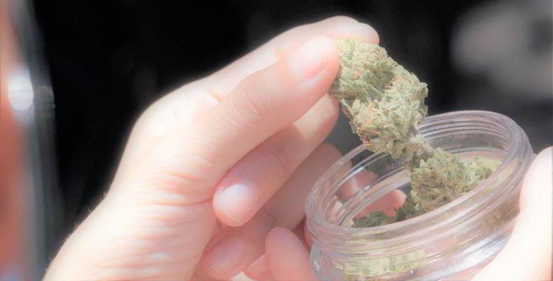 Dove comprare marijuana a Roma oggi