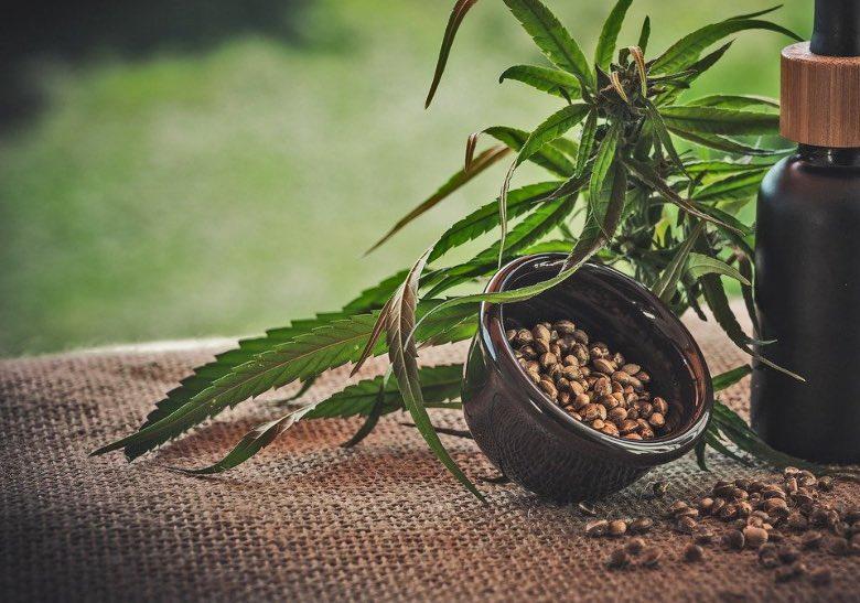 dove comprare semi di cannabis e olio cbd