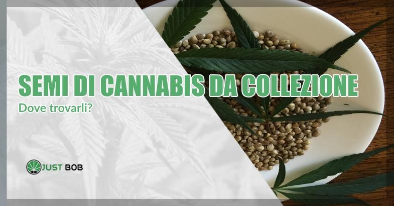 dove tovare semi di cannabis