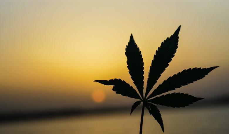 marijuanas effetti sulla psiche e sulla salute