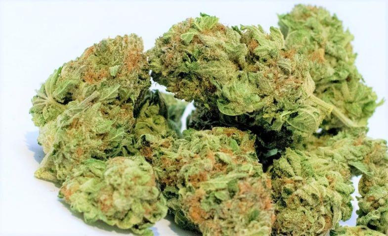 Quanto costa la marijuana al grammo su Justbob.it