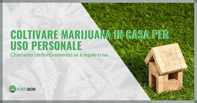 Coltivare marijuana in casa per uso personale: chiariamo (definitivamente) se è legale o no.