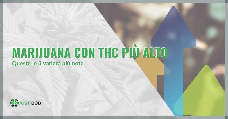Marijuana con thc più alto: queste le 3 varietà più note