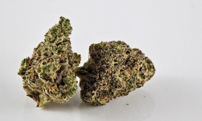 migliori varietà di erba legale purple gg 4