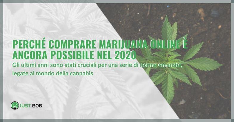 Perché comprare marijuana online è ancora possibile nel 2020