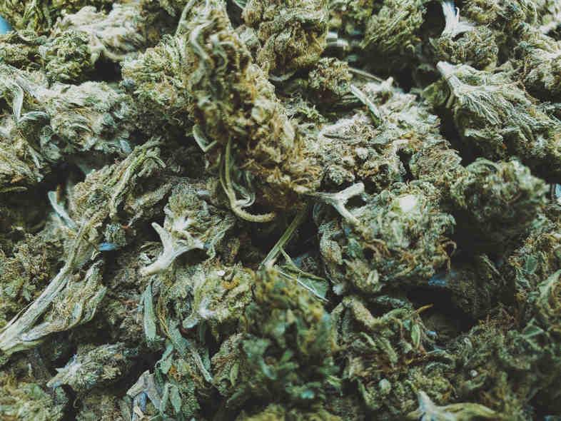 comprare boccioli di marijuana