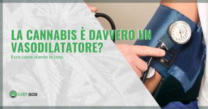 Cannabis vasodilatatore.