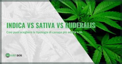 canapa indica vs sativa vs ruderalis