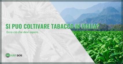 Si può coltivare tabacco in Italia senza autorizzazione