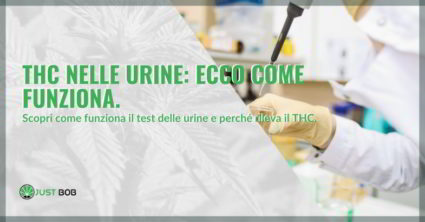 THC nelle urine fumatore cronico