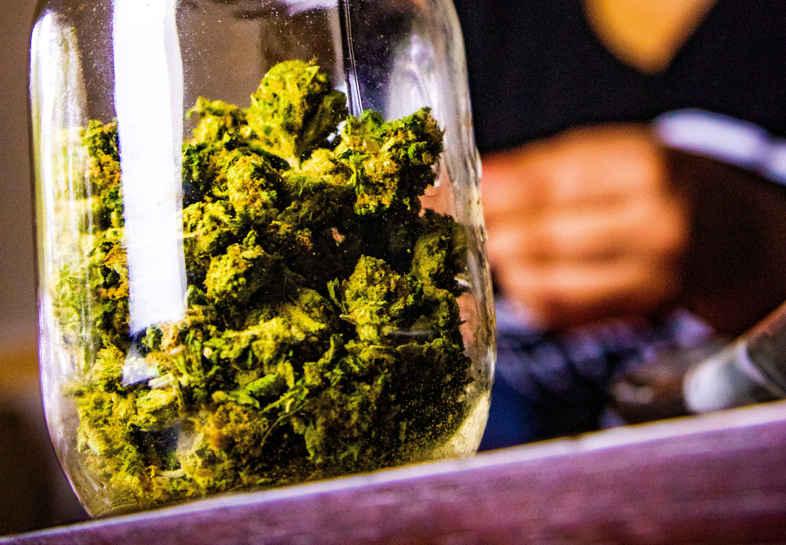 Marijuana con thc per uso terapeutico